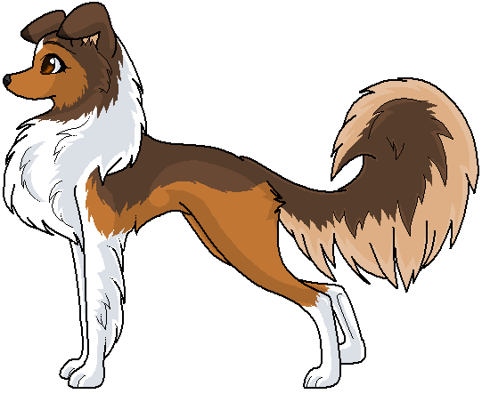 Scottish Collie by guardianpinkneko
