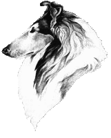 collie head