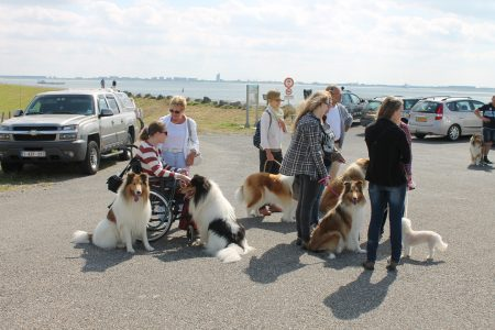 American Collie meeting 2016